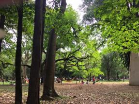parque-do-ibirapuera