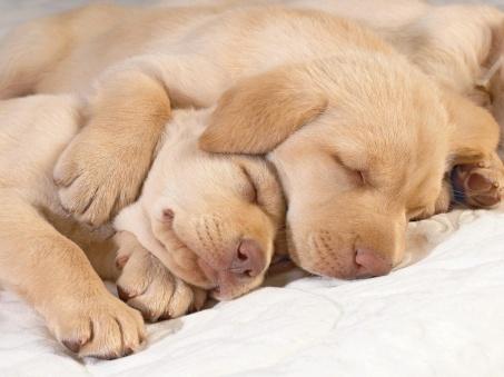 quantas-horas-o-cachorro-deve-dormir-ao-dia
